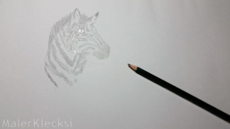 3D-Zebra3