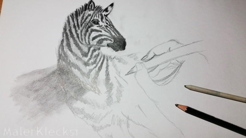 3D-Zebra5