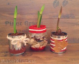 Amaryllis - Konservendosen als Blumentopf