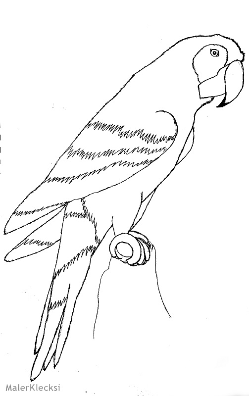Ausmalbild_Papagei2