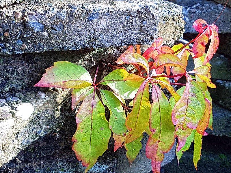 fotoparade-pflanze-sucht-sich-ihren-weg