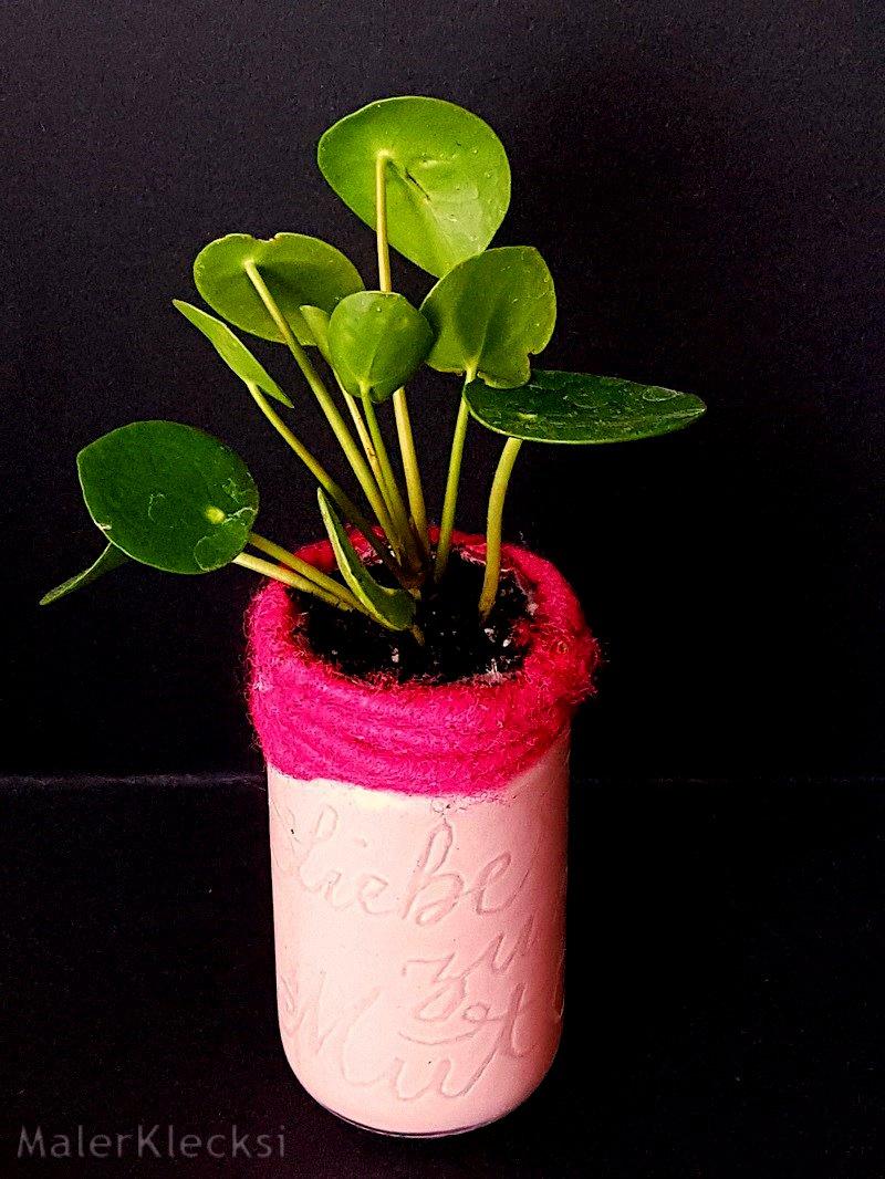Graviertes-Glas-mit-einer-Pilea-bepflanzt