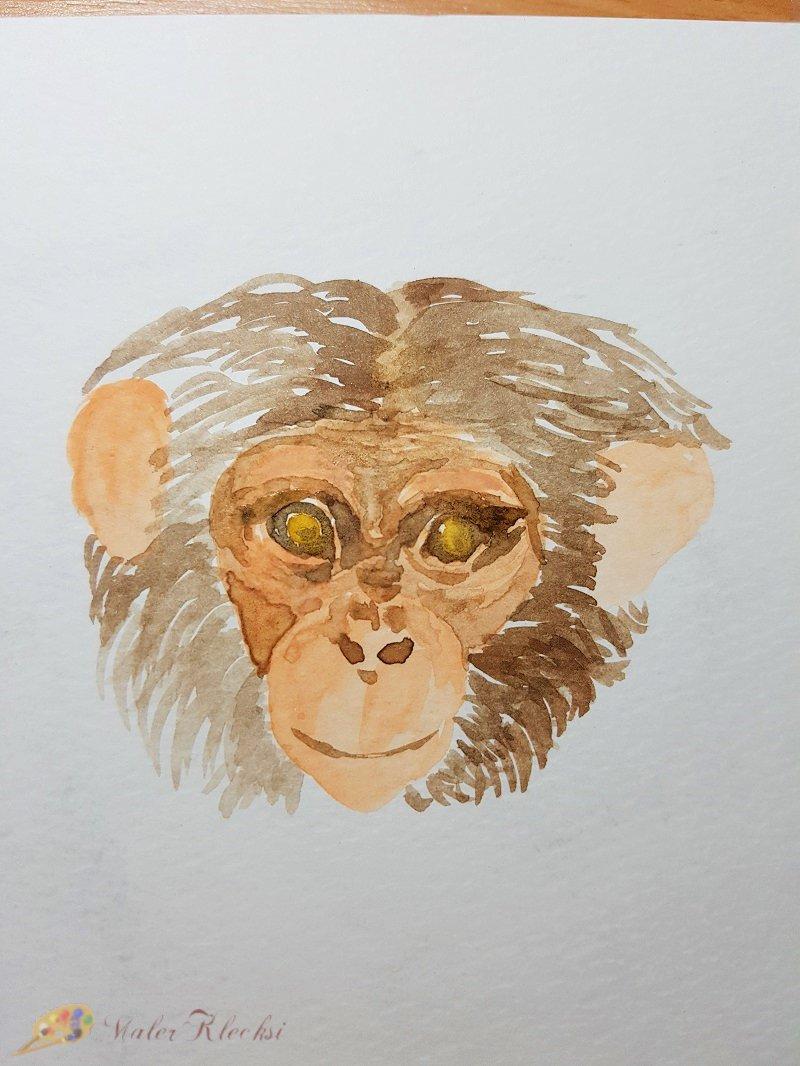 Tier-ABC-Kopfbehaarung