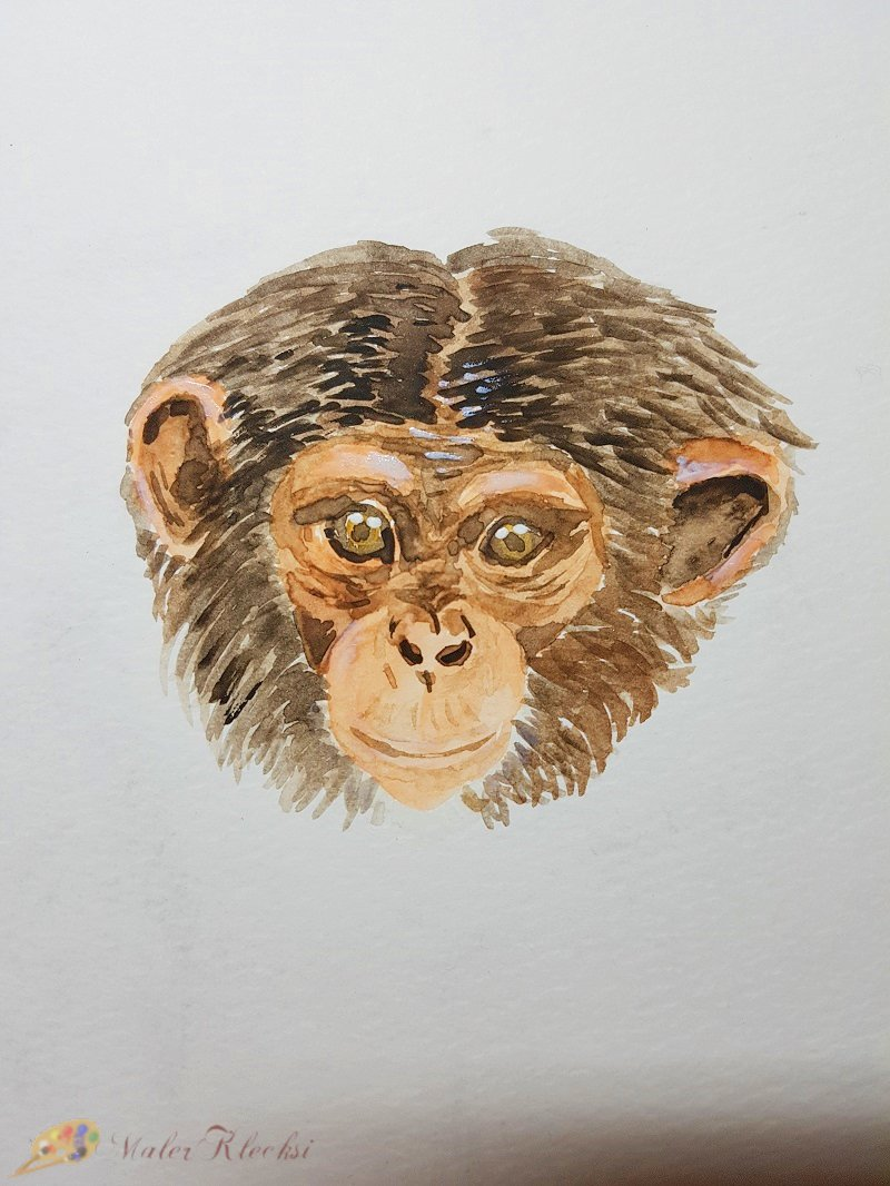 Tier-ABC-Affenkopf