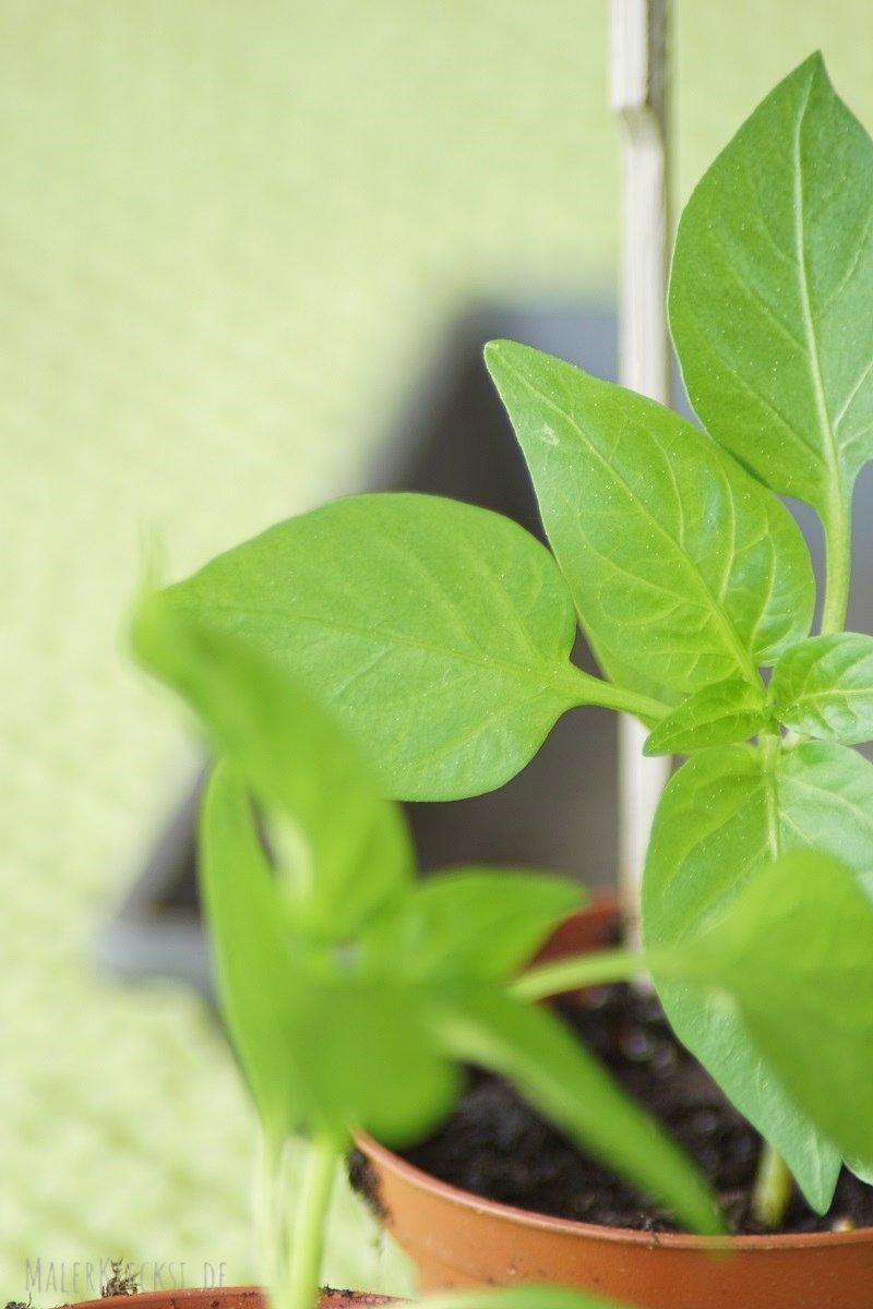 Obst und Gemüse selbst ziehen, für den Balkon
